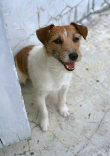 dog06