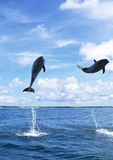 dolphin02