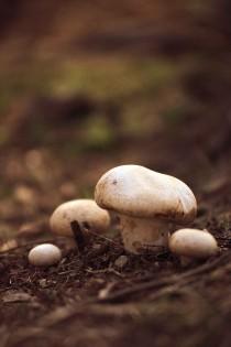 mushroom01