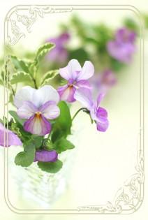 flower39