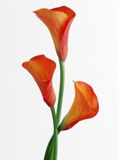 flower41