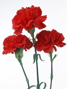 flower44